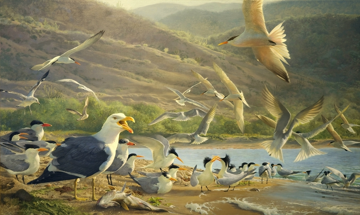 Seabird painting by John C. Pitcher