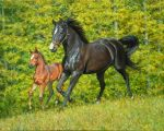 Horse painting by Sue Westin