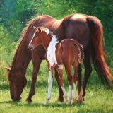 Pinto Horse painting by Sue Westin