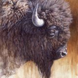 Bison oil painting by Sue Westin