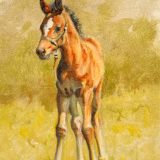 horse foal oil painting by Sue Westin