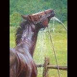 Wet horse oil painting by Sue Westin