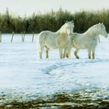 White horses oil painting by Sue Westin