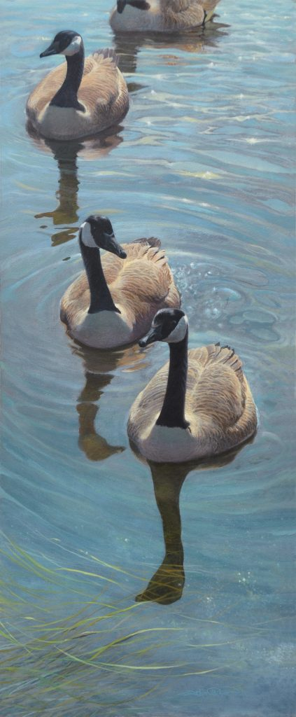 Canada Geese painting by John C. Pitcher
