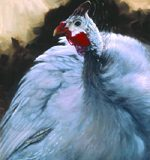 A painting of a Guinea Fowl by Sue Westin