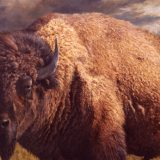 Bison painting by Sue Westin
